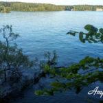 Осташково и Павельцево — территория не для рыбалки