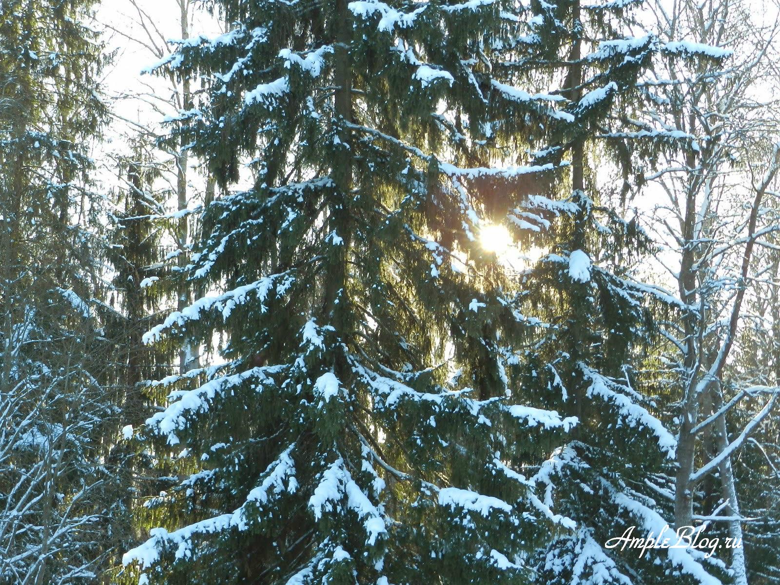 Зимний лес Загорские дали