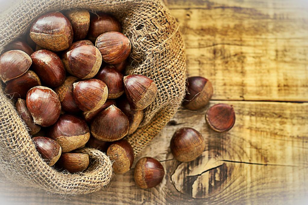 Сохранение лесного ореха в домашних условиях