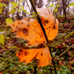 Осенний лес: Грибная тема