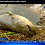 Химкинское водохранилище превращено в рыбье кладбище!